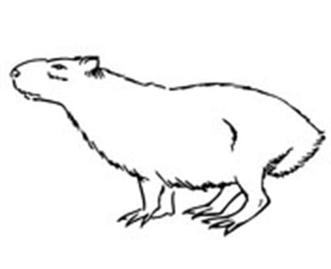 capybara coloring pages free coloring pages