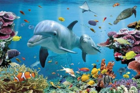 Xmas Cushions Underwater Dolphin Fantasy Tropical Dolphins Poster Buy