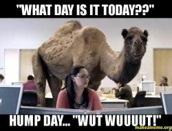Camel Hump Day Meme - quot what day is it today quot hump day quot wut wuuuut quot hump
