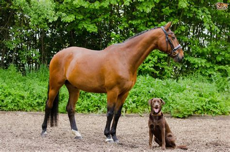 How to Keep Dogs Safe Around Horses When Out on a Walk