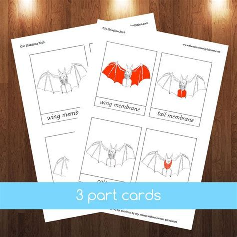 printable montessori pdf montessori parts of bat 3 part cards pdf education pdf