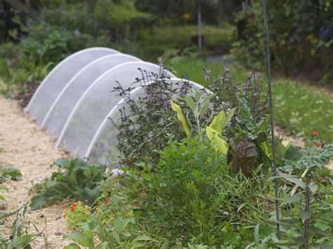 Smart Gardening For Insects Cover Up The Rows Msu Vegetable Garden Row Covers