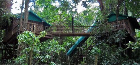 our jungle house our jungle house amicimieiphukettravelagency