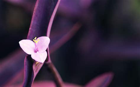 wallpaper flower macro pink macro flowers wallpaper 34766 2560x1600 px