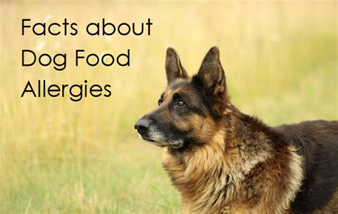 best puppy food for allergies facts about food allergies dr alfred plechner