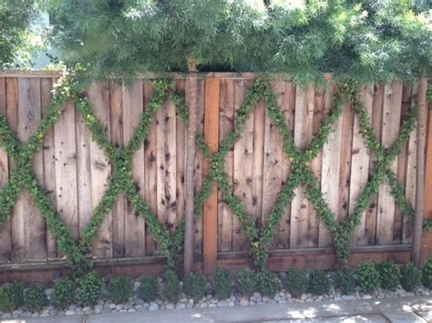 Narrow Trellis 10 Best Images About Narrow Garden Bed Planting On
