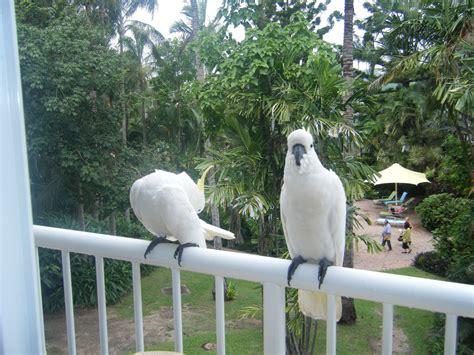 Daydream Island Resort and Spa   Whitsunday Coast