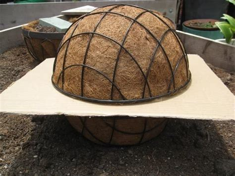 how to make a sphere out of wire how to make a succulent home design garden