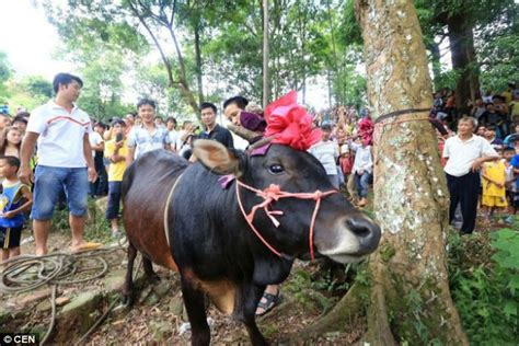 Lu Gantung Led P1005 9 pictured horrifying moment a live bull is hung from a