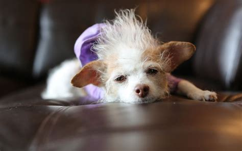 susies senior dogs 17 best images about susie simon aka suthie simey on spread