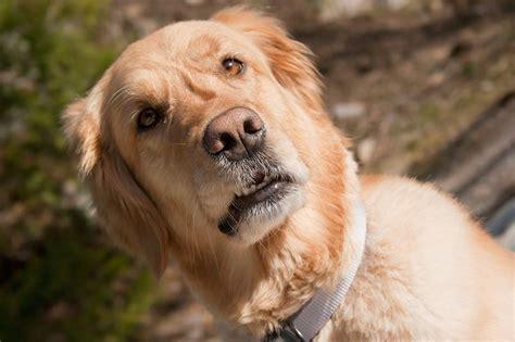 do dogs understand do dogs understand object permanence cuteness