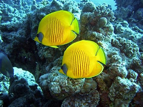 catamaran coral reef snorkel bermuda king s wharf bermuda cruise port shopping attractions