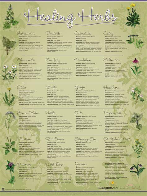 herb chart 94 best herbal medicine images on pinterest medicinal