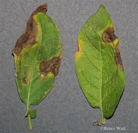 plant disease report diagnosis plant disease diagnosis