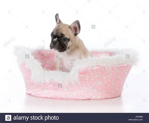 cute dog bed cute dog beds french bulldog sleeping on cute suitcase dog