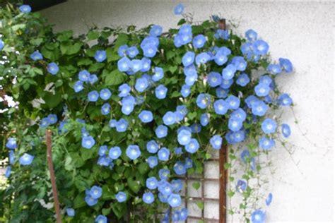 pflanzen für fensterbrett balkon dekor bepflanzen