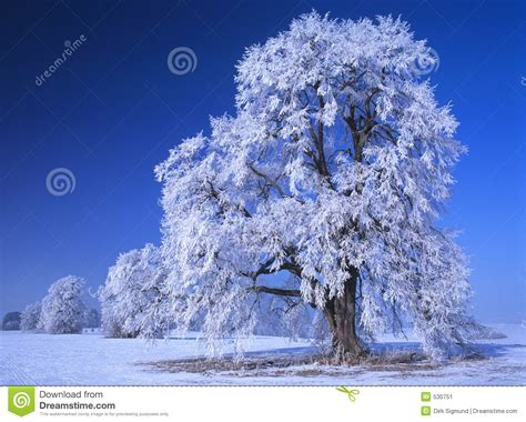 perfect winter day  stock image image  christmas holiday