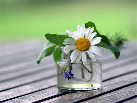 ceggio dei fiori hotel r best hotel deal site