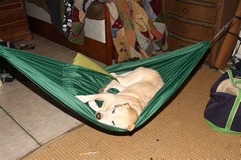 puppy hammock diy hammock diy do it your self