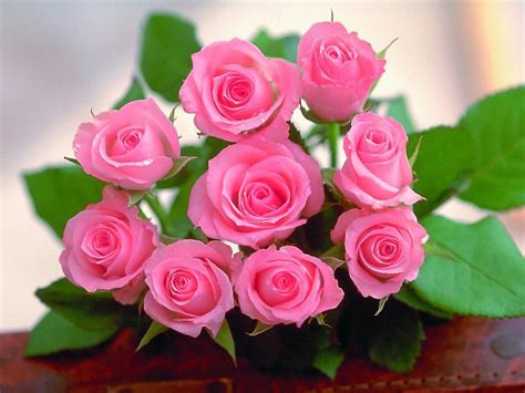 images of love roses the rose of love roses wallpaper 13967150 fanpop