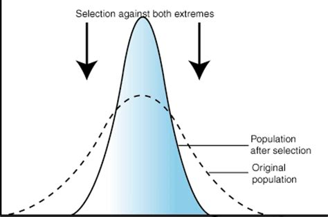 evolution of population 2 natural selection in populations