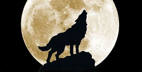Wolf Moon by Wolf Moon And A Big Day For Venus Astro Bob