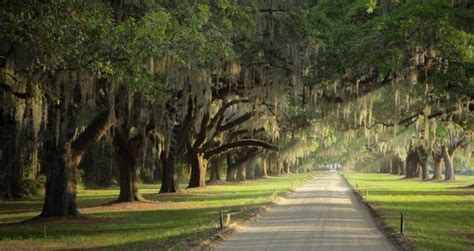 87 best boone hall plantation images on pinterest architecture beautiful places and colonial boone hall plantation the best of charleston sc pinterest