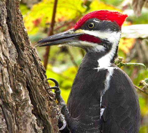 woodpeckers of florida