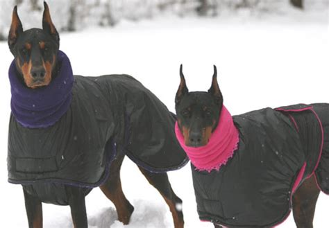 puppy winter coat snow the world s warmest winter coat blue willow coats