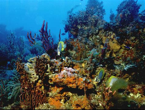Coral Reef L by Coral Reefs Sea Photo 114580 Fanpop