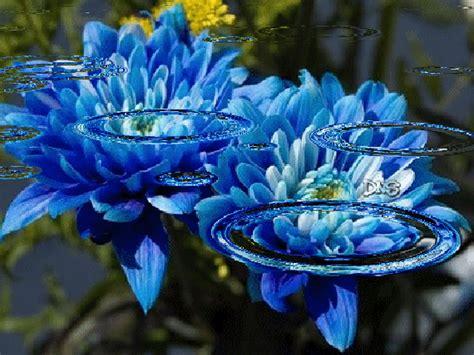 imagenes de rosas azules con brillo y movimiento imagenes con movimiento de flores azules con agua