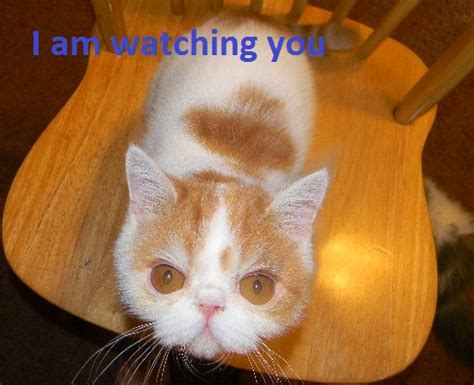 cat barking like cat barks like till it realizes there is a human