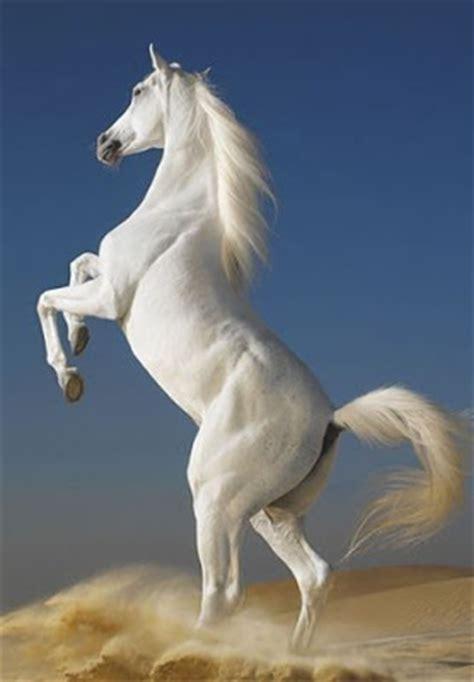 foto kuda lucu animasi gambar bergerak  kawin wallpaper dll gambar lucu gif kartun rumah