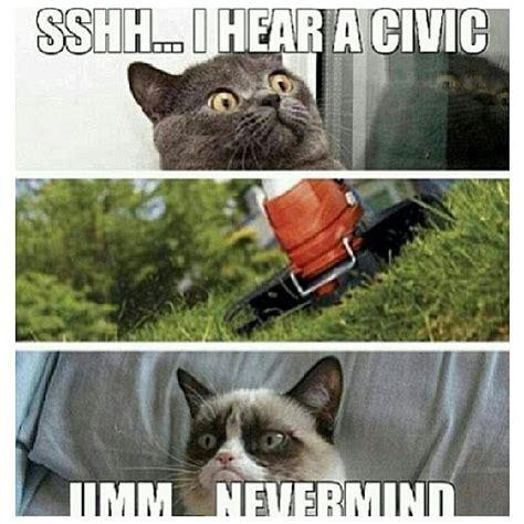 Gay Cat Meme - car meme car humor car funny angry car honda car