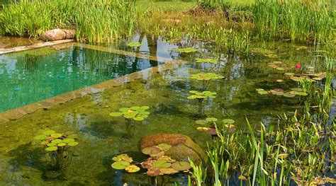 design guidelines the ponds all about natural swimming pools green home guide ecohome