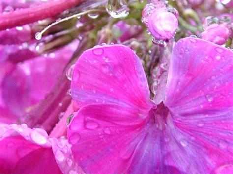 flower screensaver wallpaper wet flowers after rain screensaver and wallpaper manager