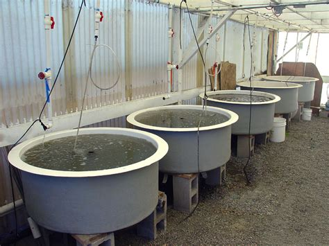 Bathtub Manufacturers Usa by Circular Fiberglass Aquaculture Tanks