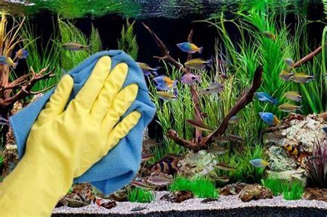 aquascape yang indah panduan cara merawat aquascape agar indah dan subur
