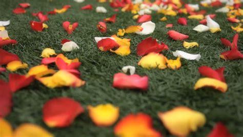 stock video  flower petals   floor