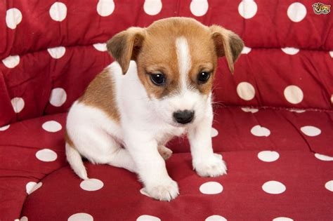 buzzfeed anxious puppy top 28 puppy or boomer puppy two happy boomer puppies this puppy