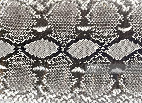 snake pattern black and white snake skin pattern black and white