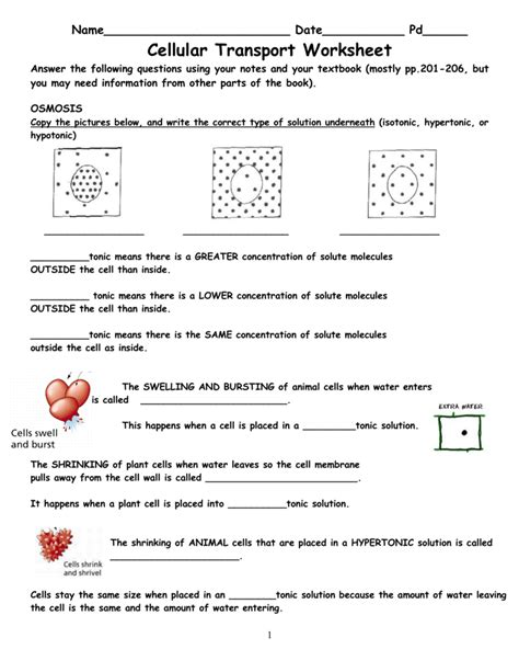 Transport Across Cell Membrane Worksheet Answers by Transport In Cells Worksheet Mmosguides