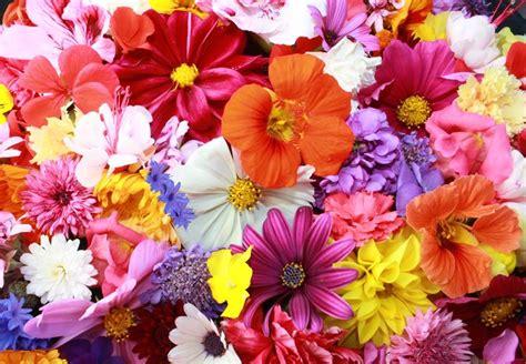 tipi di fiori e significato simbologia fiori significato fiori simbologia fiori