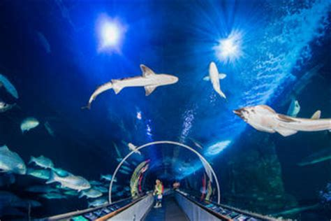 Lu Aquarium Malaysia san francisco aquarium of the bay general admission ticket
