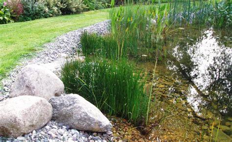 Sumpfzone Teich by Die Verschiedenen Vegetationsarten Im Schwimmteich Optimal