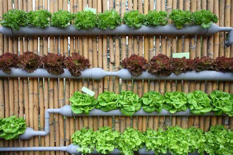 vertical vegetable gardens 20 vertical vegetable garden ideas total survival