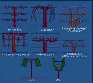 vine trellis systems determine system lergp g r a p e pages