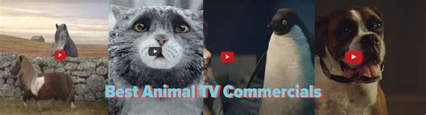 animal tv commercials easipetcare