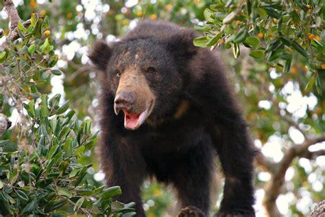 top  wildlife experiences  sri lanka  families