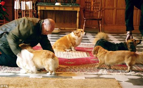 the queen s corgi royal corgi breeder also gave animals to top nazis including hermann goering daily mail online